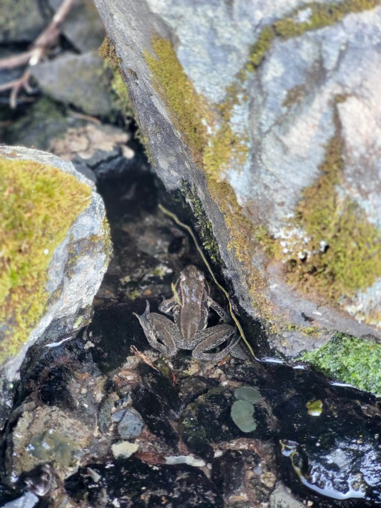 Frog in the Lowland Forest