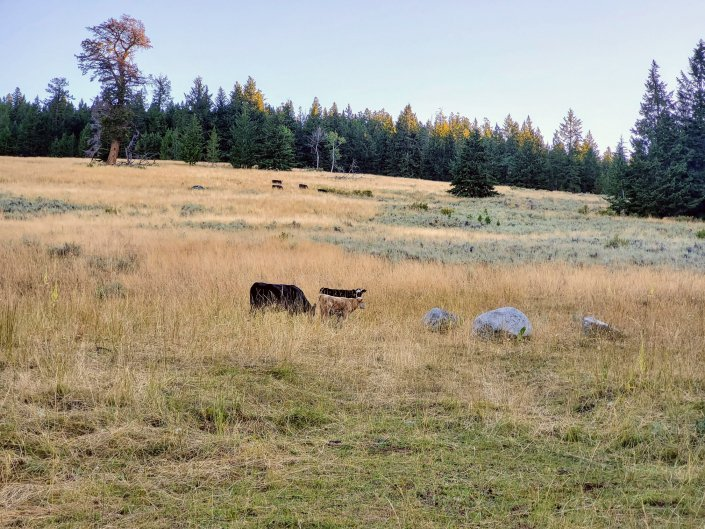 Horseshoe Basin Romp