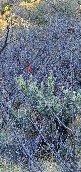 Superstition Wilderness Charlebois Hike 011