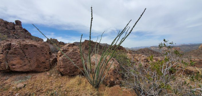 Superstition Wilderness Weaver's Needle 141
