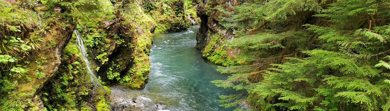 Quinault River Canyon